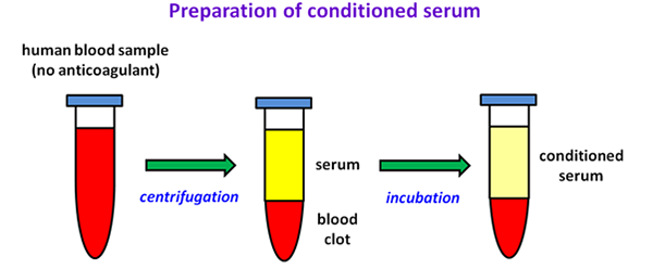 Preparation of conditioned serum